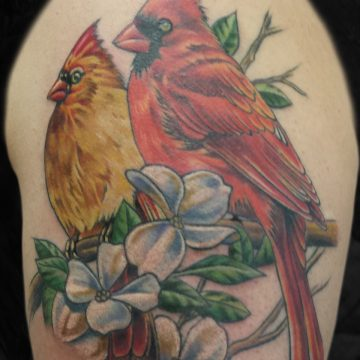 Color-Cardinals-Arm-BSpickard