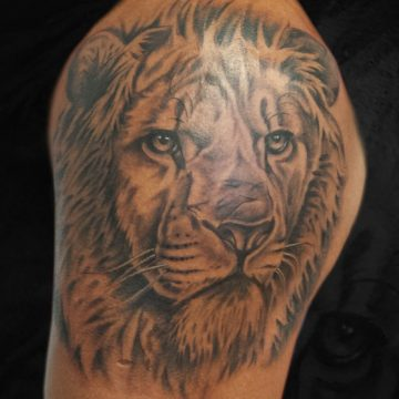 Grayscale-Lion-Shoulder-BSpickard