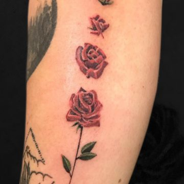 color-rose-stages-forearm-Aragon